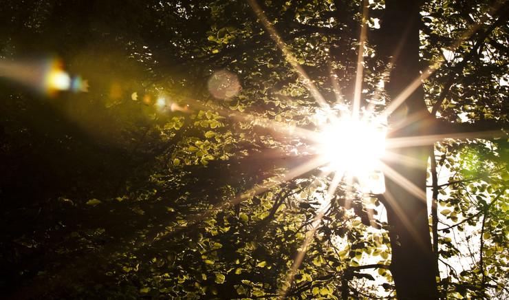 Solskin gennem træer